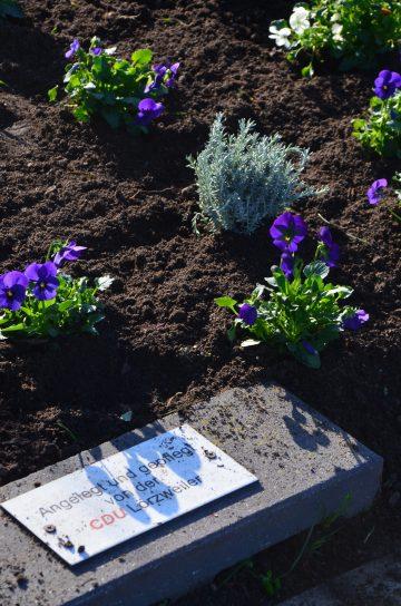 Bepflanztes Beet CDU Lörzweiler